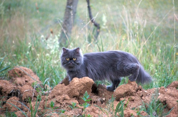 Hunting mice