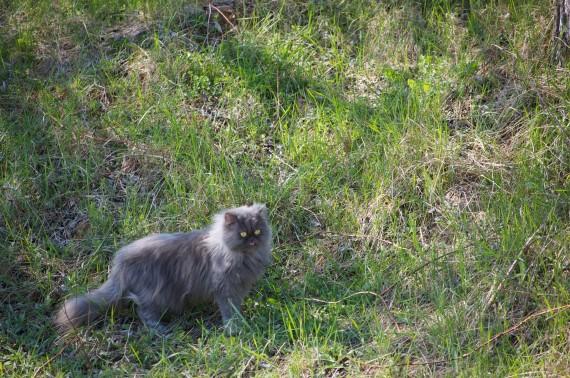 Ahhh the grass