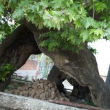 A hollow tree