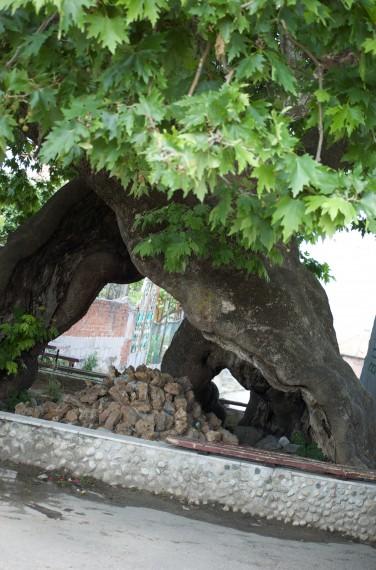 A hollow tree