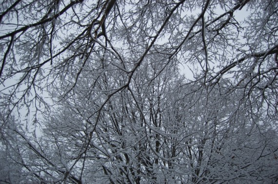 Snowed in branches